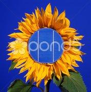 Sonnenblume mit Solarzelle Stock Photos