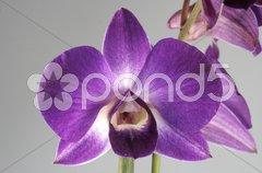 Orchidee Stock Photos