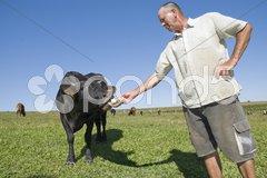 Dairy Farmer Stock Photos