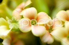 Makroaufnahmen einer  Blüte - Stock Photos