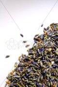 Lavendel Stock Photos