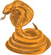 Cobra Viper Snake Coiled Drawing. Stock Illustration