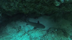 Divers swim underwater between reefs. Blue water. Deepness. Many fish. Shark Stock Footage