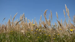 Meadow in summer day Stock Footage