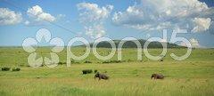 Two elephants walking through the Masai Mara Stock Photos