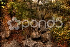 Schlucht im Krimgebirge Stock Photos