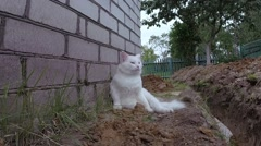 White fluffy cat sitting funny and looks around. Stock Footage