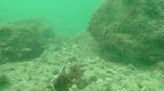 Reef fish Fl Keys two Stock Footage