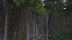 Aerial crane shot of thick pine trees in forest and fields and ocean Stock Footage