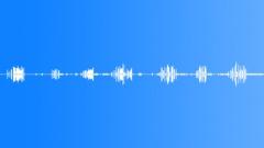 The Cook IslandsRarotongaAtiuMangai Myna Bird Sing Sporadic Chickens BG light j Sound Effect
