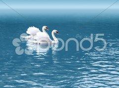 Two swan Stock Photos