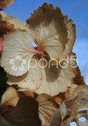 Goldener Herbst Oktober Stock Photos
