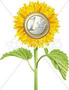 Sonnenblume Euro Stock Photos