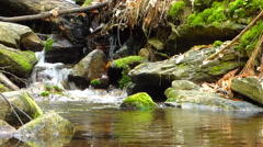 Small creek in forest Stock Footage