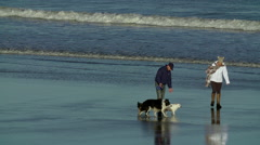 WALKING 3 DOGS BEACH SCARBOROUGH NORTH YORKSHIRE Stock Footage