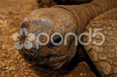 Galapagos-Schildkröte Stock Photos