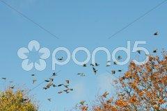 Vogelschwarm Stock Photos