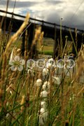 Grasses blowing in the breeze Stock Photos