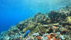 Underwater Coral Reef with Tropical Fish Stock Footage