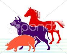 Schwein, Rind, Pferd Stock Photos