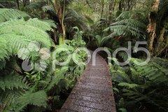 Der Weg durch den Regenwald Stock Photos