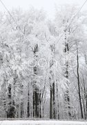 Gefrorene Bäume Stock Photos