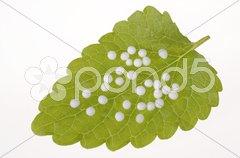 Naturmedizin oder alternative Medizin mit Globuli Stock Photos