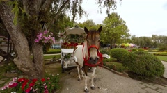 Horse and carriage await passengers at Flower Garden Park in Dalat, Vietnam Stock Footage