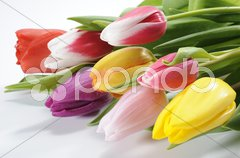 Ostern Osterstrauss Tulpen Stock Photos
