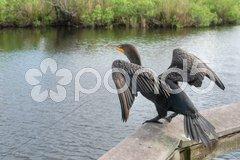 Take Off, Everglades, Florida, January 2007 Stock Photos