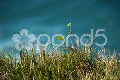 Grass on Byron Bay Coast, Australia, 2009 Stock Photos
