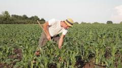Weed control on organic farm Stock Footage