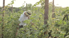 Farmer picking cucumber in vegetable greenhouse Stock Footage