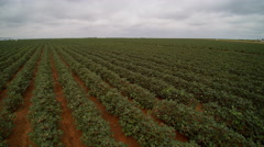 Aerial of cotton fields Stock Footage