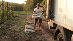 Farmer shipping boxes with vegetables in the truck Stock Footage