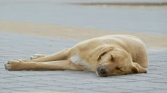 On the sidewalk sleeping stray dog slow motion video Stock Footage