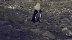 4k Fantasy Shot on Giant's Causeway of a Queen Walking on Rocks Stock Footage