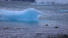 Ducks between blue icebergs in Jokulsarlon glacial lagoon Stock Footage