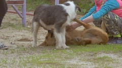 Children play with dogs slow motion video Stock Footage