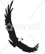 Fliegender Adler Stock Photos