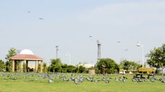 Pigeons fly away in a park Stock Footage