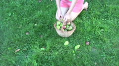 Farm girl in shorts picking pears from ground to basket. 4K Stock Footage