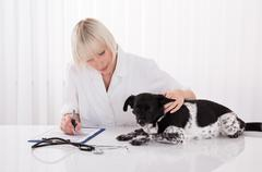 Female Veterinarian Writing Prescription For Dog After Medical Examination Stock Photos
