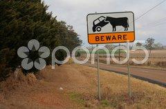 Warnung vor Rindvieh Stock Photos