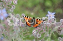 Schmetterling Stock Photos