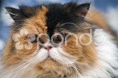 Thinking Cat, Italy Stock Photos