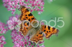 Schmetterling Stock Photos