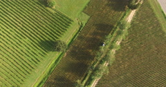 Top view of vineyards arranged in small plots Stock Footage