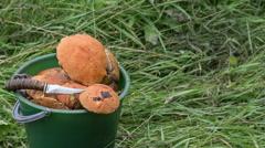 Orange-cap boletus Stock Footage