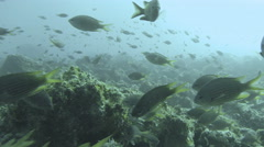 Coral Reef Bommie With Fish Stock Footage